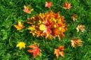 Wzmocnienie odporności przed jesienią