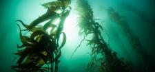 Algi - zdrowie z morskich głębin Islandii