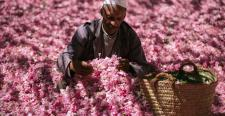 Różane serum piękności