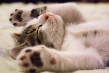 Jak się dogadać z kotem w obopólnym interesie
