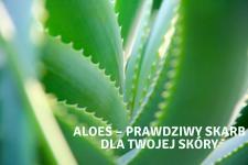 Aloes – prawdziwy skarb dla Twojej skóry