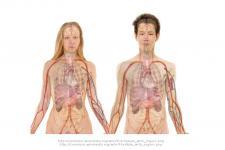 Leczenie hcv terapią bezinterferonową